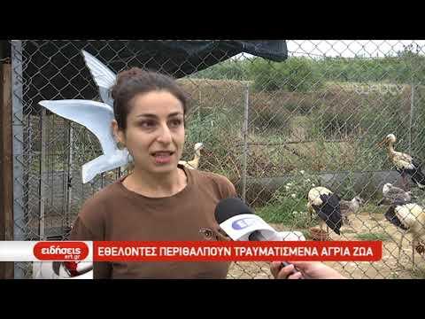 Εθελοντές περιθάλπουν τραυματισμένα άγρια ζώα   17/07/2019   ΕΡΤ