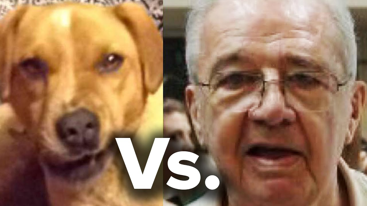 Do People Actually Look Like Their Dogs? thumbnail