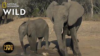 Safari Live - Day 240   Nat Geo Wild