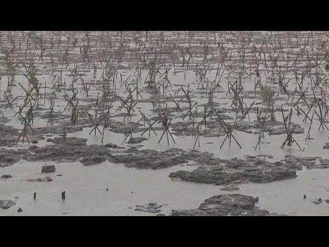 Vietnam spared terror of Typhoon Tembin