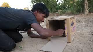 KingFisher Bird Trap Using CardBoard Box