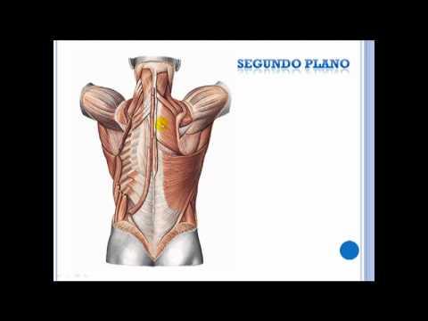 ¿Por qué el dolor de espalda a las 38 semanas