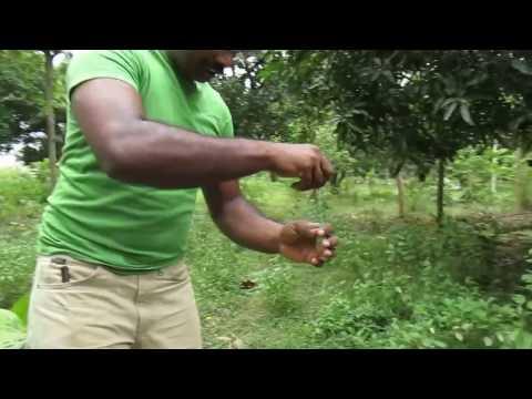 Hogy néznek ki a halott pinworms ek