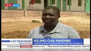 Kilimo Cha Maembe: Wakulima Kerio kunufaika na soko la zao lao