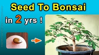 How To Grow Bonsai Trees From Seed - Subtitles Available