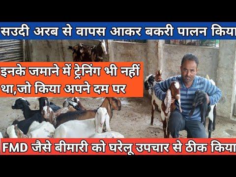 डॉक्टर बोल दिया कि अब सारी बकरियां मरेंगी,पर घरेलू इलाज से कमाल कर दिया #GoatFarming #StellarFarming