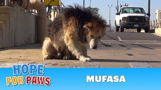 Download Youtube: Rescuing a homeless senior dog from a water treatment facility.  Please share.