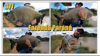 Os gigantes da Fazenda Paraná - Fishingtur na TV 377