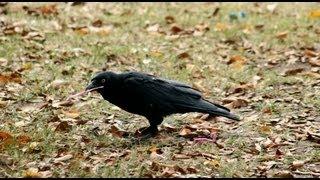 Crow - Causal Reasoning