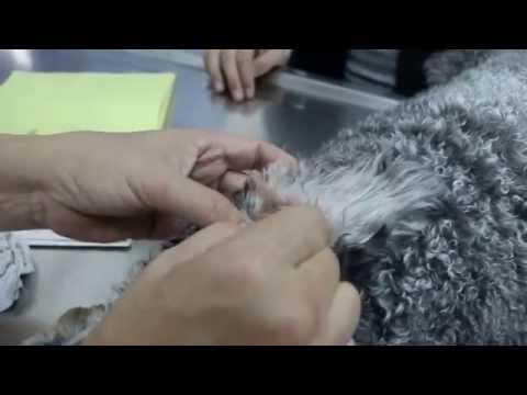 Sinusuportahan ba salitsilovo- sink paste ng pigment spots