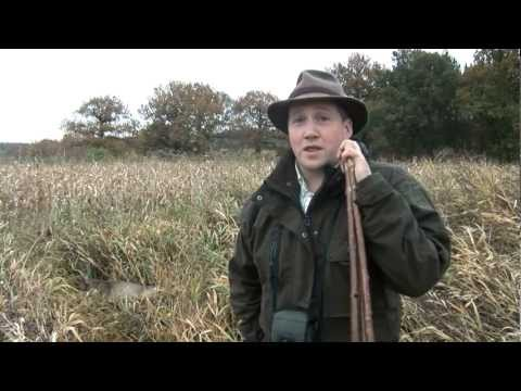 Roe stalking in Hampshire – poaching problem