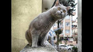 Смешные Видео Приколы с Котами. Смешные Коты до Слез. Смешные Животные 2019.#32