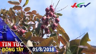 Đằng sau giống nhãn tím giá cao ngất ngưỡng, người Thái lùng mua giống | TIN TỨC ĐÔNG TÂY – 5/8/2018