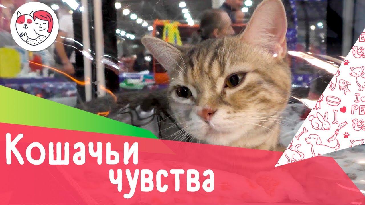 4 интересных факта о кошачьих эмоциях и чувствах