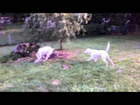 Mazy and fosterdog Dottie 3
