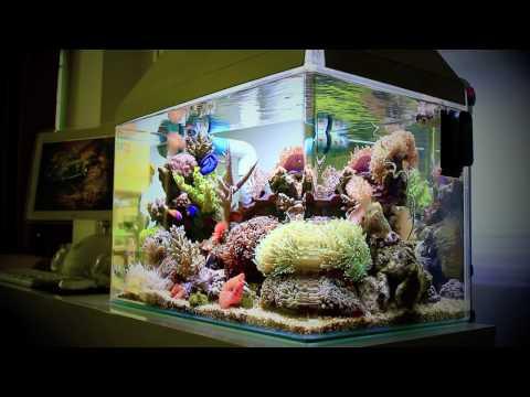 Nano Reef Tank 25 Gallon (Canon EOS 550D Video Test)