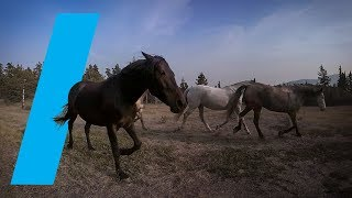 Wild With: Horses (360 Video)