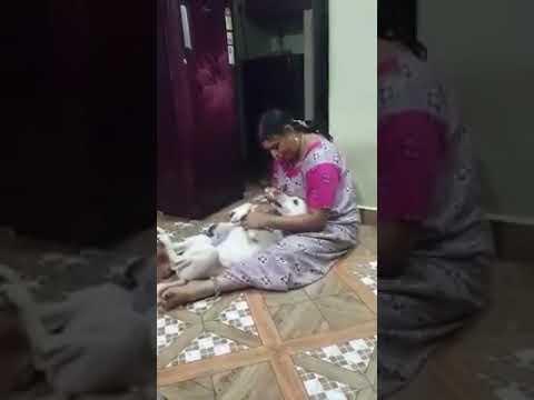 Indian women feeding dog 2018