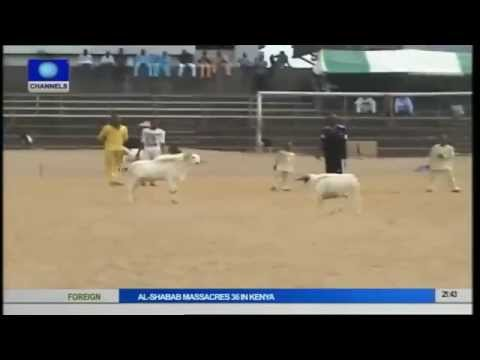 Rams run for Safety during a Ram Fight in Lagos State