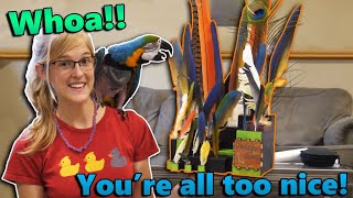 An Awesome Feather Display in our Mail?! (Fan Mail Part 20) by Snake Discovery