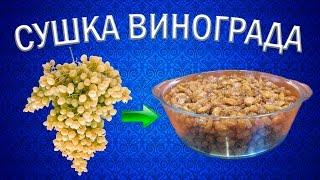 Как приготовить изюм из винограда кишмиш? | Сушилка для овощей и фруктов Ezidri
