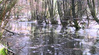 Henry Kaiser - Cold rain and snow (traditional)