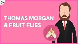 Genetics - Thomas Morgan & Fruit Flies - Lesson 10