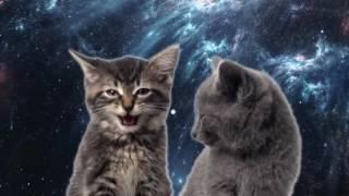 Поющие Котята Музыкальный Клип