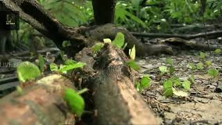 LEAF CUTTER ANT|Farming the food with help of fungus|Watch fully|In LIVE BEINGS.
