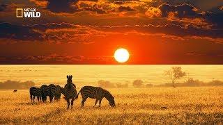 Savannah Life Wild Africa [National Geographic Documentary HD 2017]