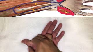 Thenar & Hypothenar Eminence Release #Forearm Series Epi 3
