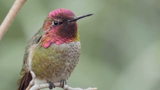 The Joy Of Birdwatching - Bird Academy