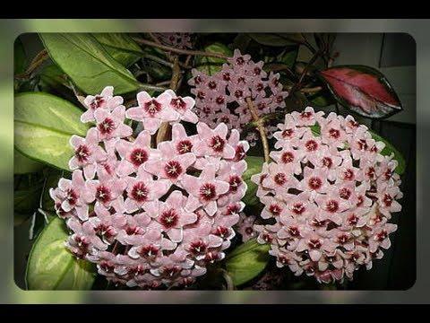 Комнатные цветы для лентяев