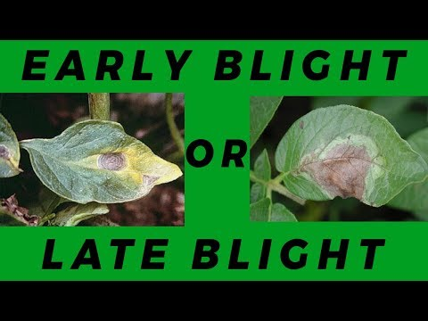 , title : 'Lesson 2: Early Blight Vs Late Blight