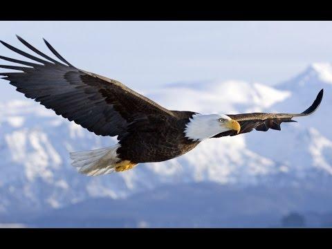 ON WINGS AS EAGLES (Isaiah 40:30-31)