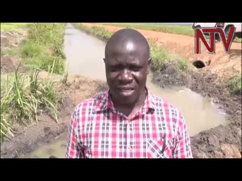 Butaleja leaders complain of delay in rehabilitation of Doho Rice Scheme