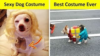 Dogs Who Had The Best Halloween Costumes