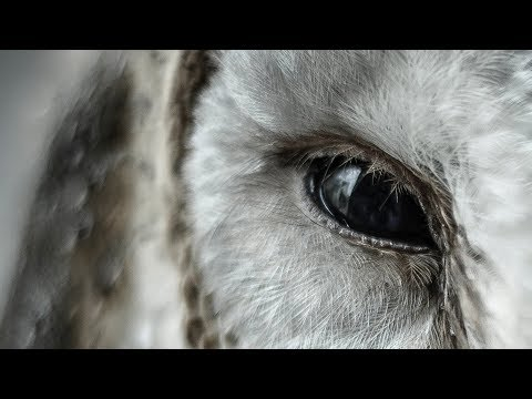 Whats The Link Between Owls And Aliens?
