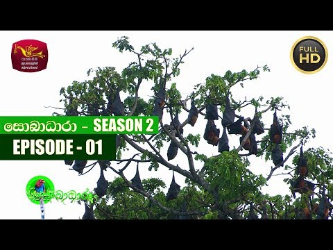 Sobadhara - සොබාධාරා | Season- 02 | Episode 01 | 2018-01-05 | Rupavahini Documentary