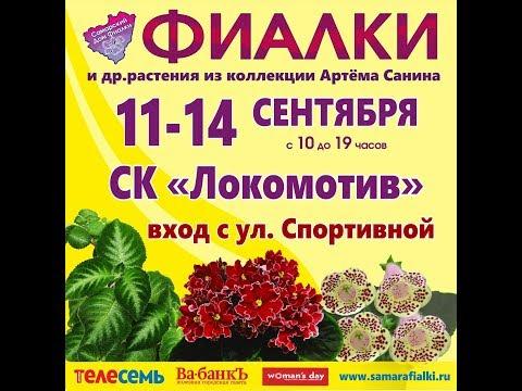 ВЫСТАВКА ФИАЛОК 11-14 сентября,Самарский Дом фиалки.