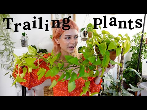 , title : 'The BEST and WORST Trailing Houseplants (in my opinion)