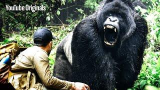 GIGANTIC Gorilla Found in Congo! | Brave Mission
