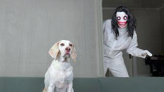 Dog vs Jeff the Killer Prank: Funny Dog Maymo Befriends Jeff the Killer in Cute Creepypasta Story