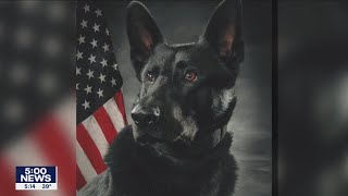 Anoka Police K-9 continues recovery after bullet struck trachea | FOX 9 KMSP
