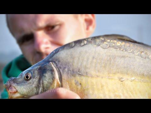 La pesca su un hopra il video di regione di Voronezh