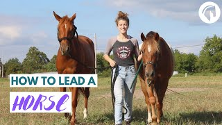 How To Lead A Horse (The RIGHT Way)