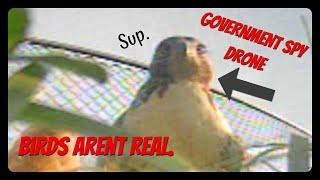 A falcon attacked my drone. | FPV