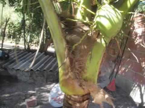 Métodos nacionais para tratar um fungo em um prego de perna