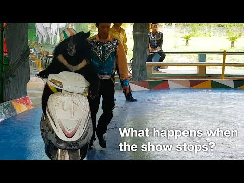 Animal circus: what happens when the show stops?