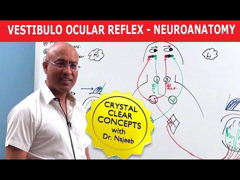 Vestibulo Ocular Reflex – Neuroanatomy